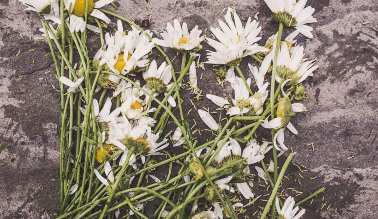 Preparing For The Unexpected: How To Deal With Grief